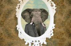 Elephant Gun Ukulele Chords